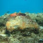 foto calabria subacquea
