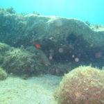 pesce sub canon