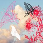 azioni-photoshop-inkydeals-foto-farfalle
