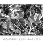 foto Canon SX620 HS