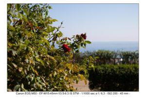 test foto canon EOS M50